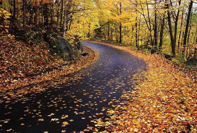 Put prekriven lišćem